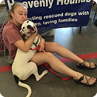 Adopt A Pet :: Freedom - Chesterfield, VA