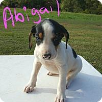 Adopt A Pet :: Abigail - Albany, NC