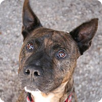 Adopt A Pet :: Pogo - Norfolk, VA
