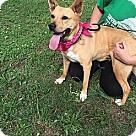 Adopt A Pet :: Ember Lou