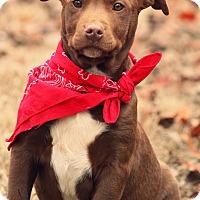 Adopt A Pet :: Waldo - Haggerstown, MD