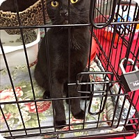 Adopt A Pet :: Valentines Day special - Clay, NY