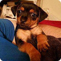Adopt A Pet :: Eowyn - Houston, TX