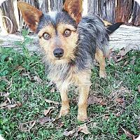 Adopt A Pet :: Jasper - Fredericksburg, TX