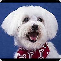Adopt A Pet :: Baxter - Ft. Bragg, CA