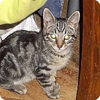 Adopt A Pet :: Trigger - Conyers, GA