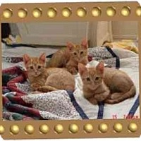 Adopt A Pet :: Rusy, Dusty, and Red - KANSAS, MO