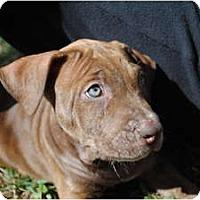 Adopt A Pet :: Gunnar - Orlando, FL