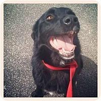 Adopt A Pet :: Lizzy - Louisville, KY