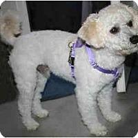Adopt A Pet :: Benjamin - La Costa, CA
