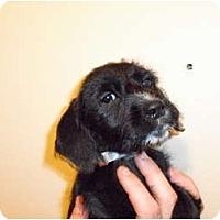 Adopt A Pet :: Stich - Coral Springs, FL