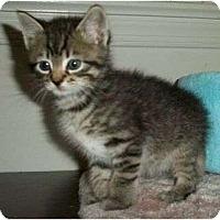 Adopt A Pet :: Watson - Reston, VA