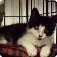 Adopt A Pet :: Snickers - East Brunswick, NJ