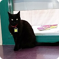 Adopt A Pet :: Pelswick - Lakewood, CO