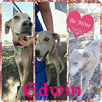 Adopt A Pet :: Edwin Adoption pending - Manchester, CT