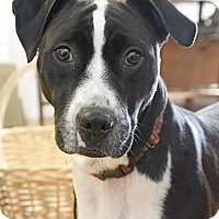 Adopt A Pet :: Shadow - Huntsville, AL