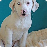Adopt A Pet :: Castle - Waldorf, MD