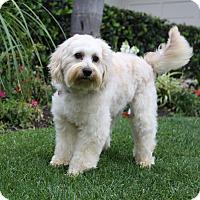 Adopt A Pet :: WARREN - Newport Beach, CA