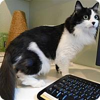 Adopt A Pet :: Junie - Lincoln, CA