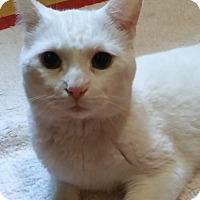 Adopt A Pet :: Casper - Witter, AR