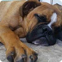 Adopt A Pet :: A393550 - San Antonio, TX