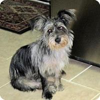 Adopt A Pet :: Sadie Mae - Mountain Home, AR