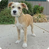 Adopt A Pet :: Charlie - Lathrop, CA