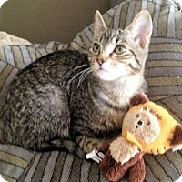 Adopt A Pet :: Chippie - Atlanta, GA