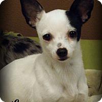 Adopt A Pet :: Lacy - Anaheim Hills, CA