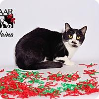 Adopt A Pet :: Elaina - Tomball, TX