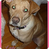 Adopt A Pet :: Lady - Elburn, IL