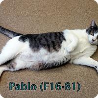 Adopt A Pet :: Pablo - Tiffin, OH
