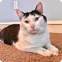 Adopt A Pet :: Buddy - Springfield, PA
