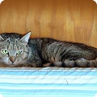 Adopt A Pet :: Joanie $35 adoption - Monterey, VA