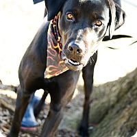Adopt A Pet :: Trevor - Muldrow, OK