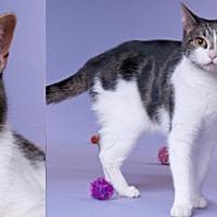 Adopt A Pet :: Eva - Chicago, IL