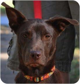 Jada | Adopted Dog | Atlanta, GA | Canaan Dog/Basenji Mix Selkirk Rex Atlanta