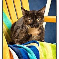 Adopt A Pet :: Leah - Owensboro, KY