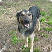 Adopt A Pet :: Keefe - Eden, NC
