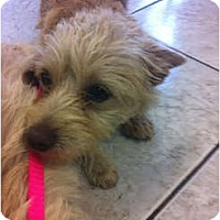 Adopt A Pet :: Frankie - Milan, NY
