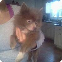Adopt A Pet :: Teddy - Lexington, TN