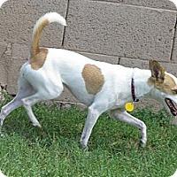 Adopt A Pet :: SISSY - Scottsdale, AZ
