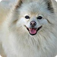 Adopt A Pet :: Sancho Pancho - Austin, TX