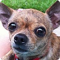 Adopt A Pet :: Pepper - Dayton, OH