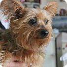 Adopt A Pet :: Delila