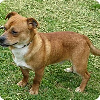 Adopt A Pet :: Ben - Richmond, VA