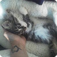 Adopt A Pet :: Reyes - Fairborn, OH