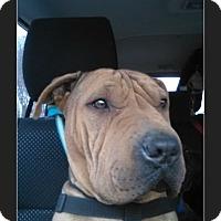 Adopt A Pet :: Rufus - San Antonio, TX