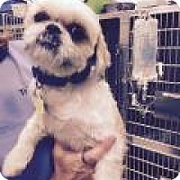 Adopt A Pet :: Matilda - Park Ridge, NJ