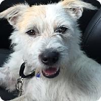 Adopt A Pet :: Gus McRae - Austin, TX